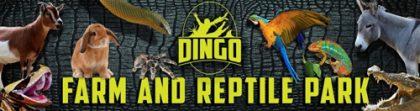 Dingo's Farm & Reptile Park